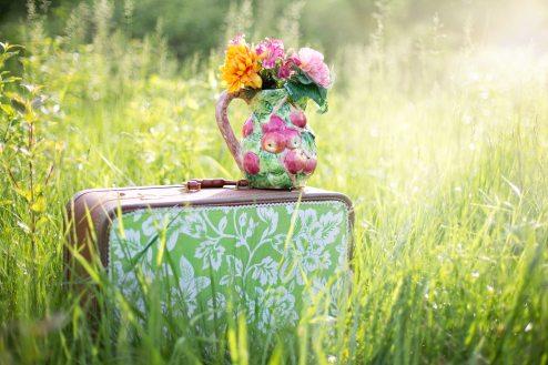 flowers-grass-meadow-35799